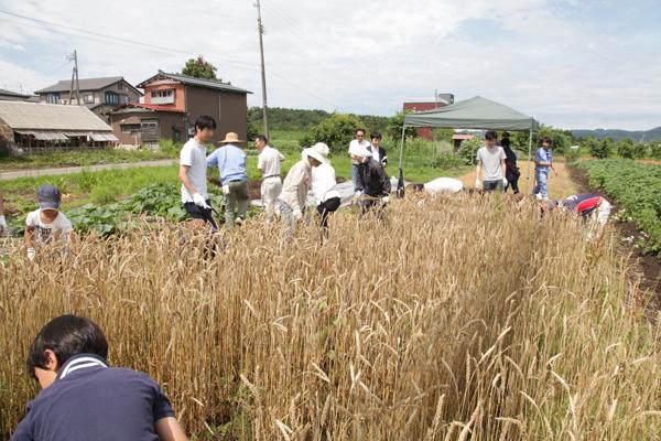 小麦収穫祭